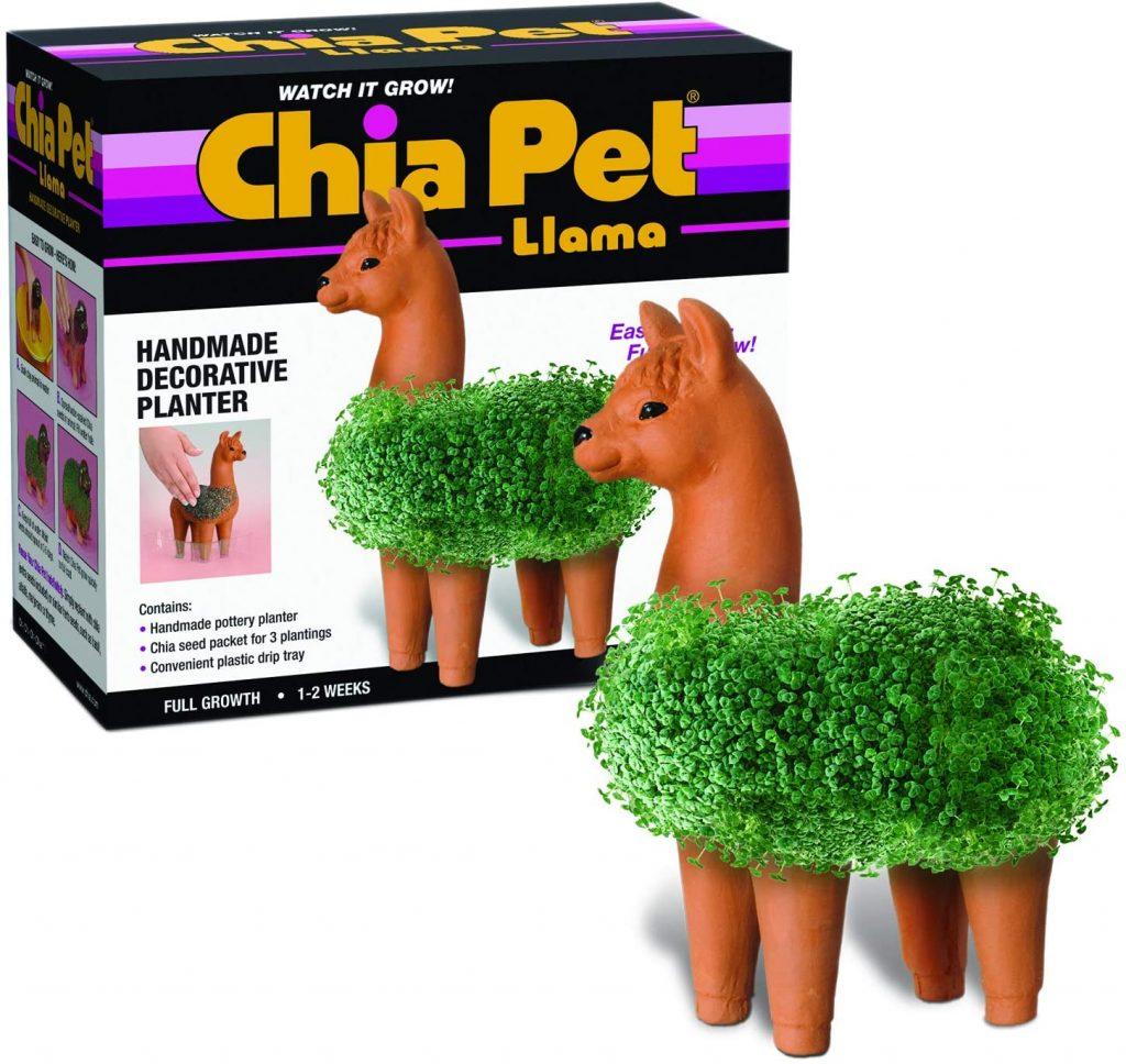A Chia Pet