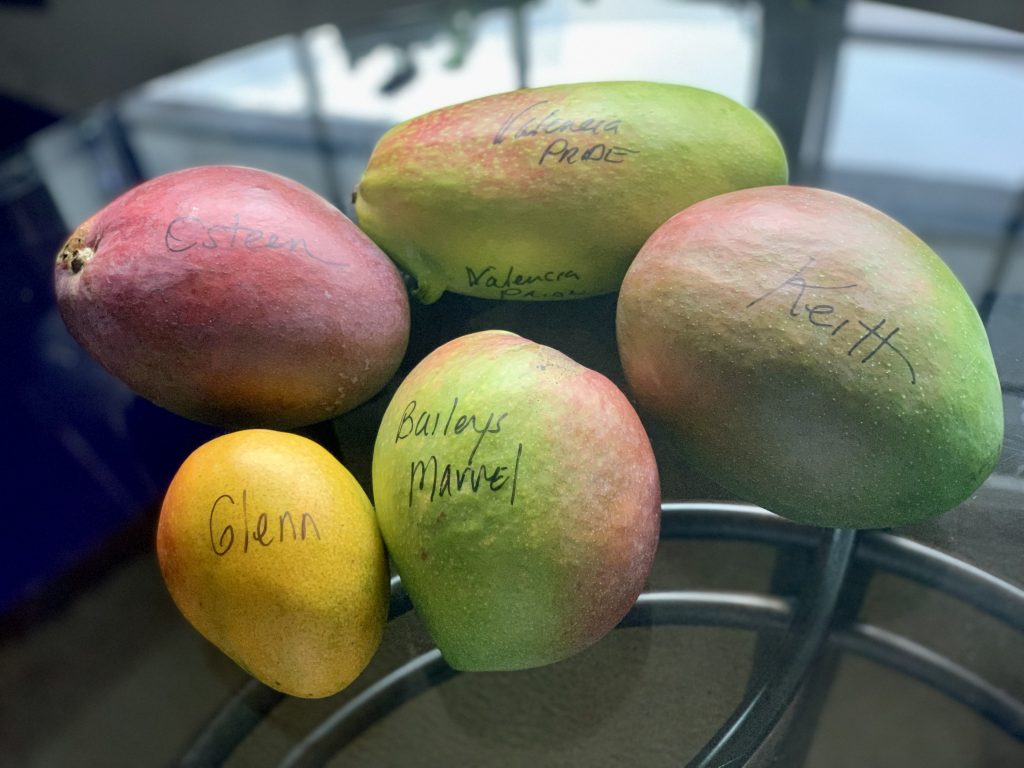 Several varieties of gorgeous mangos from Merritt Island, Florida to be used in Forbidden Rice Veggie Bowls with Sriracha Mayo